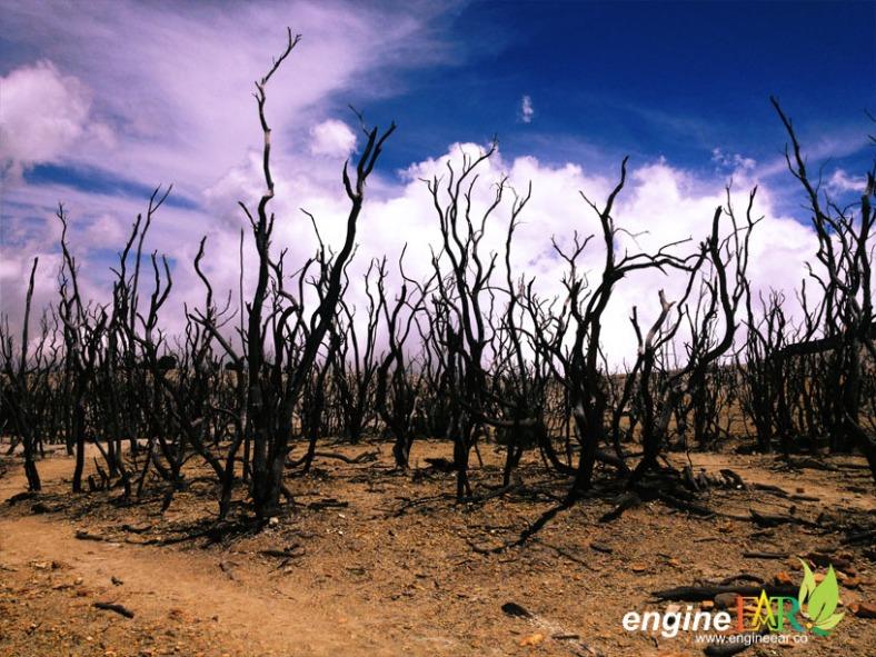 Hamparan Hutan Mati
